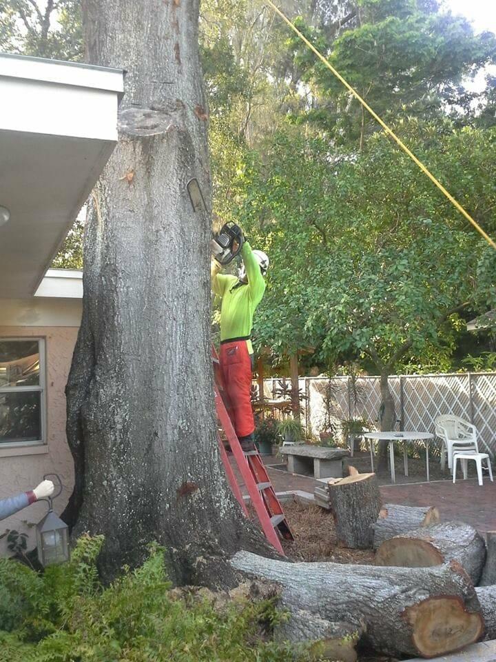 Arboriculture Consulting